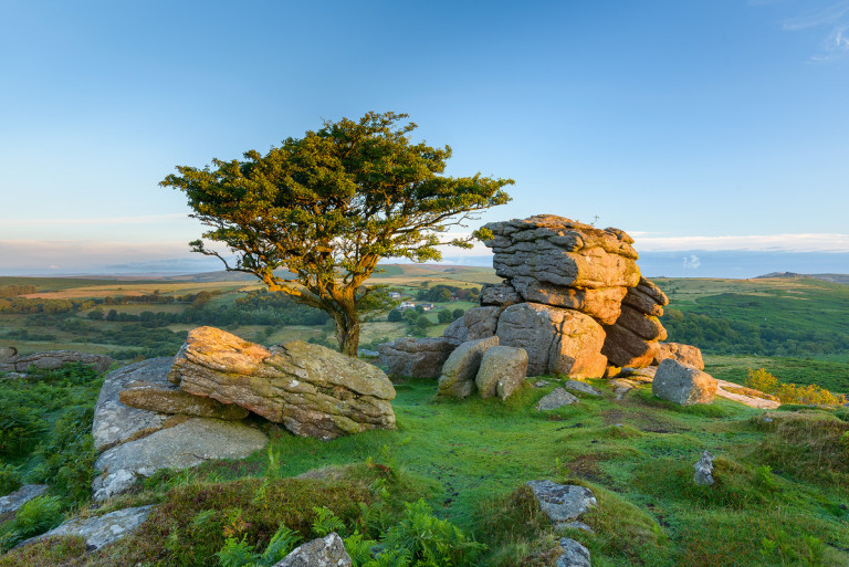 Iconic Hawthorn and Tor on Dartmoor