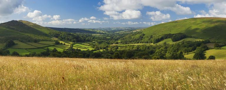 Dartmoor vibrant summer colours