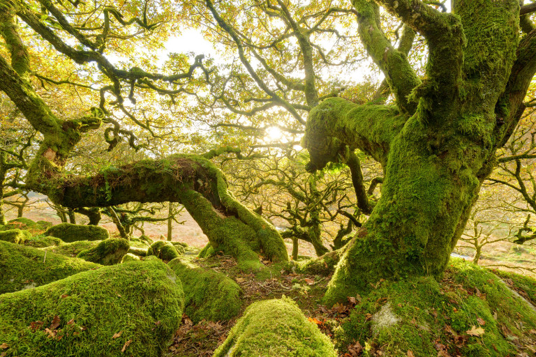 autumn in ancient woodland