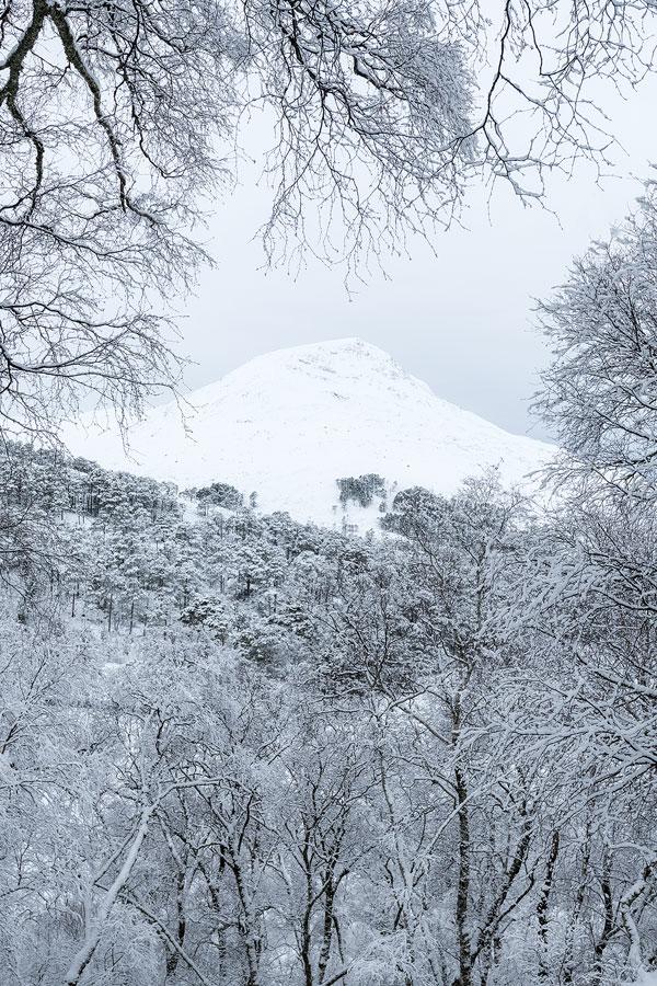Sgurr Dubh through snowy woodland